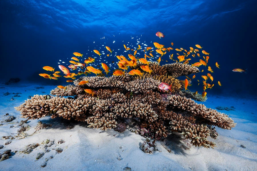 underwater-marine-life-photography