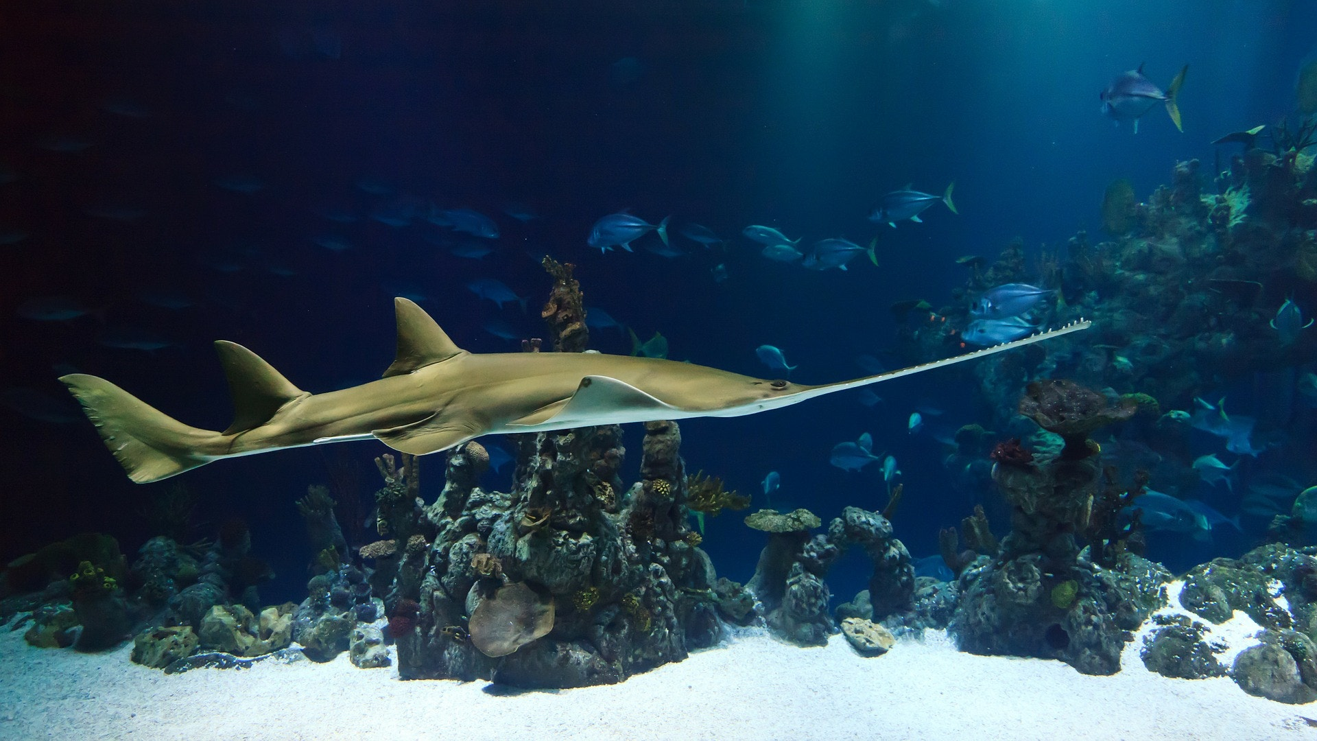 underwater photography examples