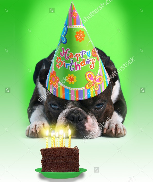 Funny Happy Birthday Card with Dog