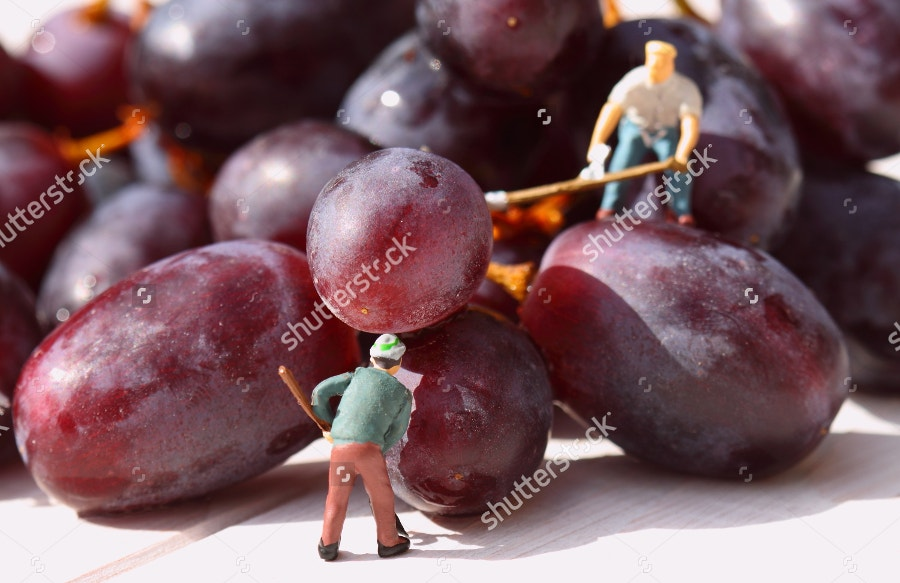 miniature-peolple-pickling-grapes