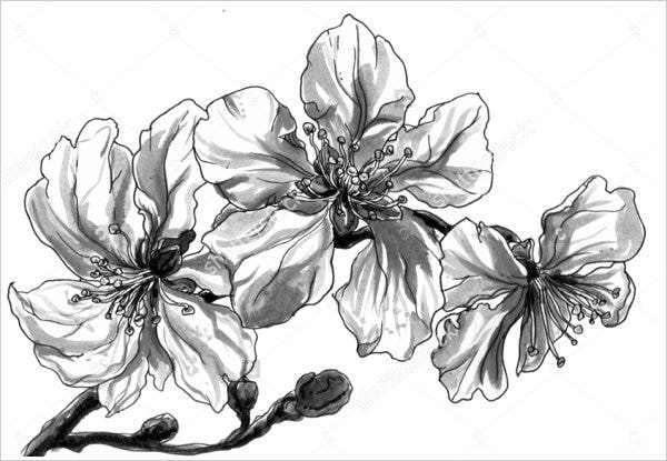 19 flower drawings free premium templates almond tropical flower drawing mightylinksfo