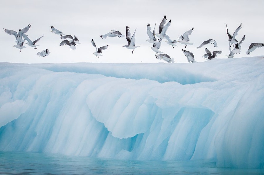 wild life iceberg photography