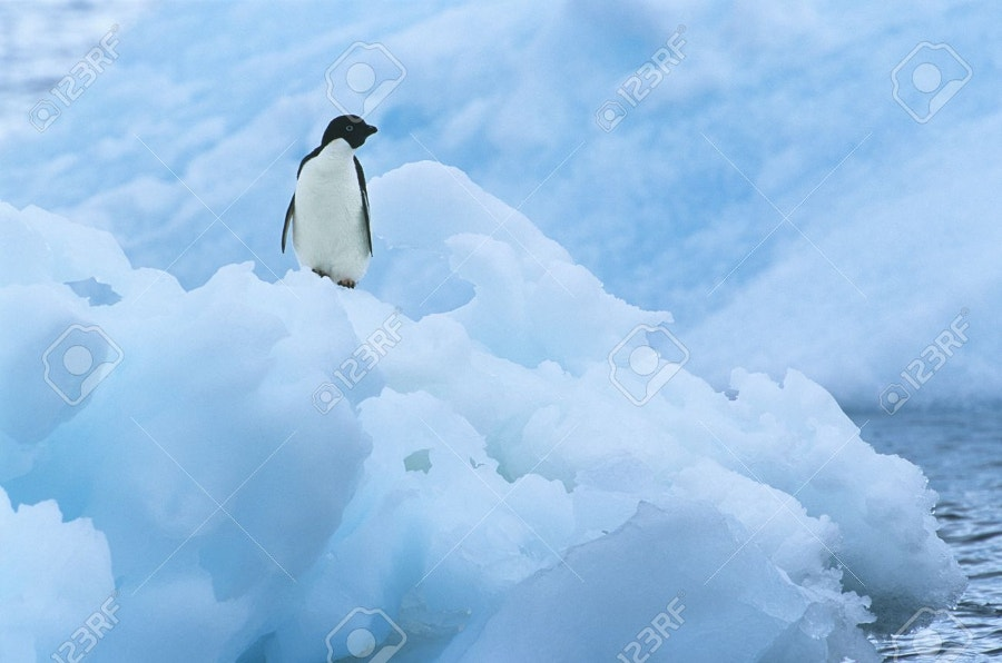 penguin on iceberg photography