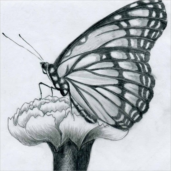 buterfly-drawing