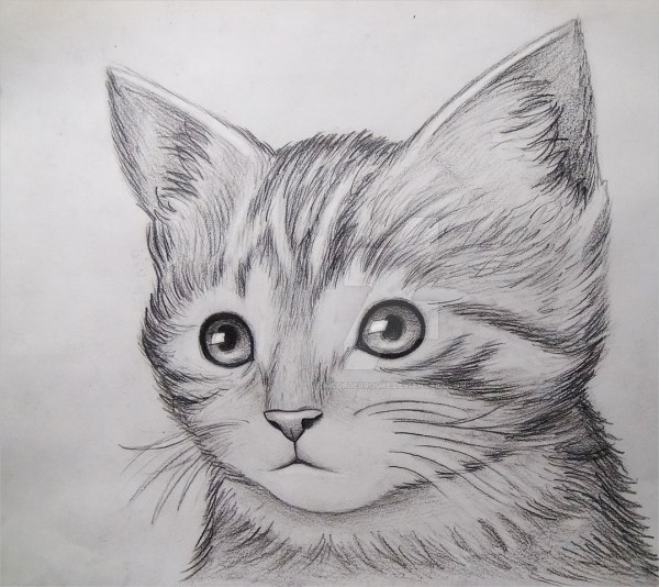 cool-cat-drawing