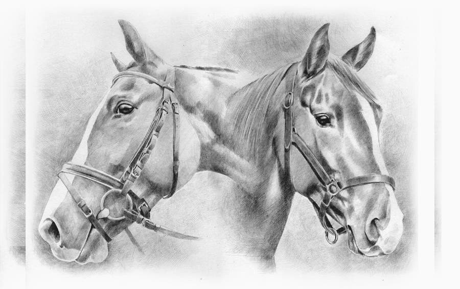 horse-drawing-by-pilar-larcade