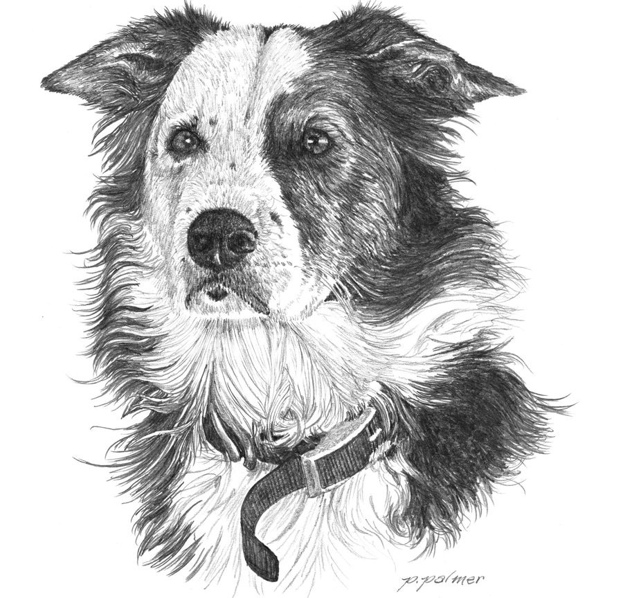 dog-drawing-by-austin