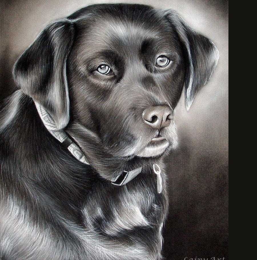 dark-charcoal-drawing-of-dog
