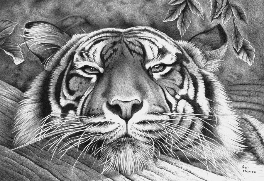 Tiger Art with Ballpoint Pen