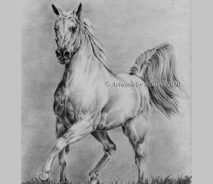 black white horse