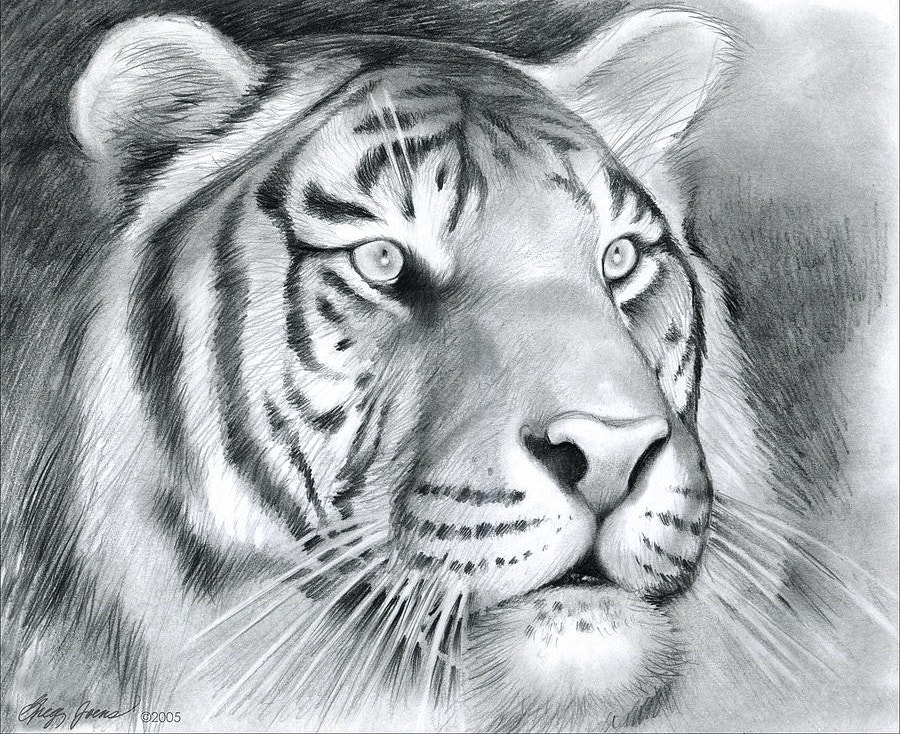 Pencil Sketch of a Tiger Head
