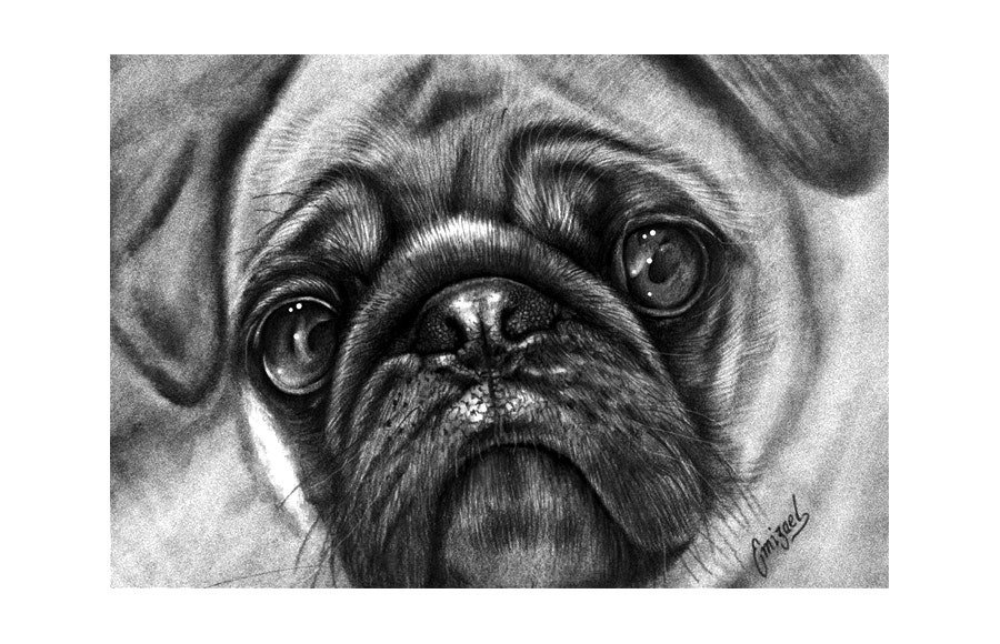 Conceptual Pug Drawing