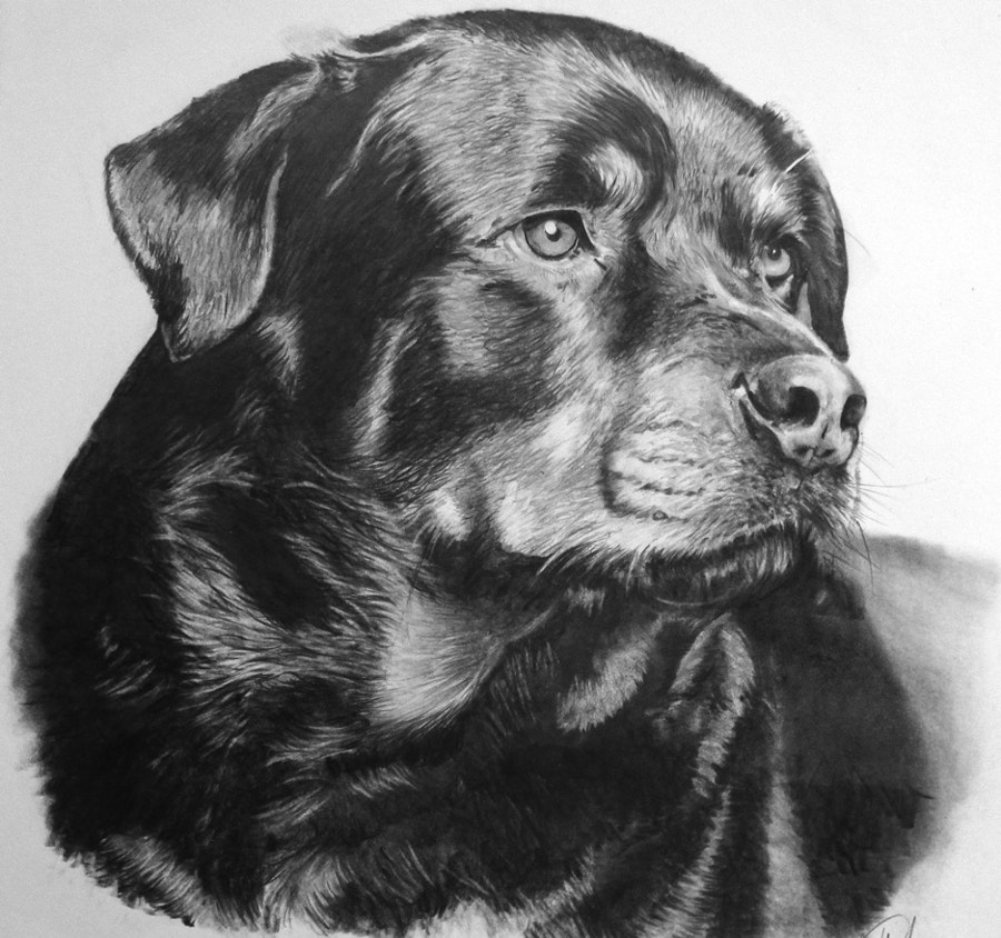 Bright Black Color Dog Drawing