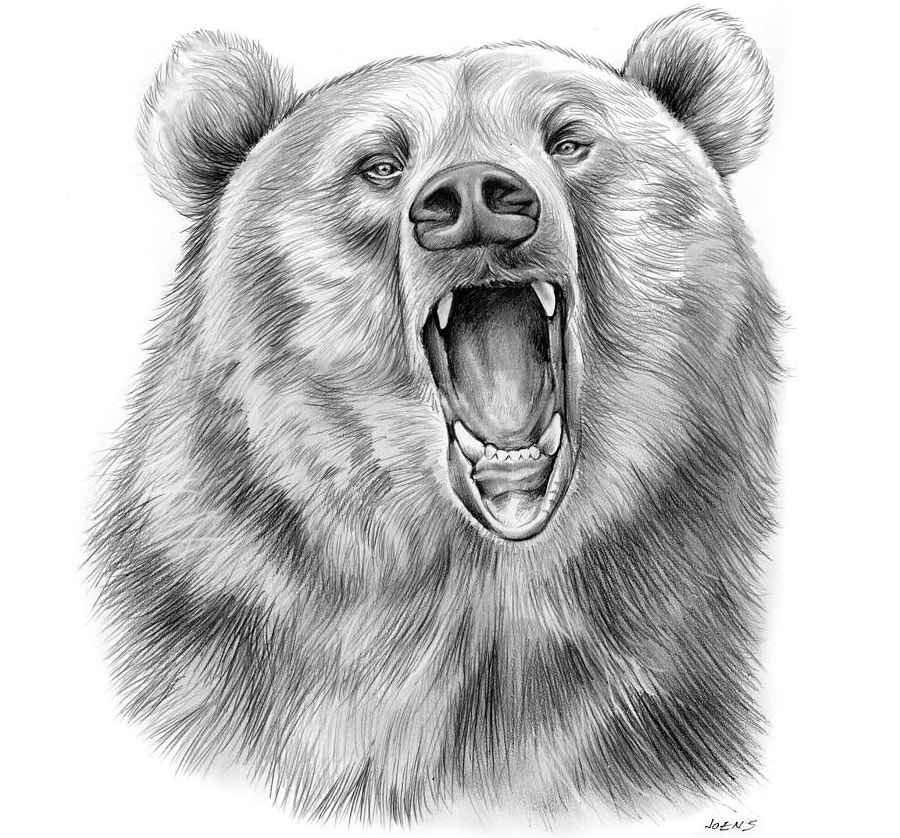 Head Shot of a Growling Bear