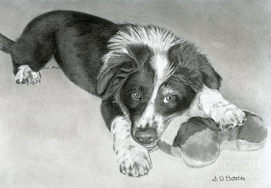 Puppy Drawing by Sarah Batalka