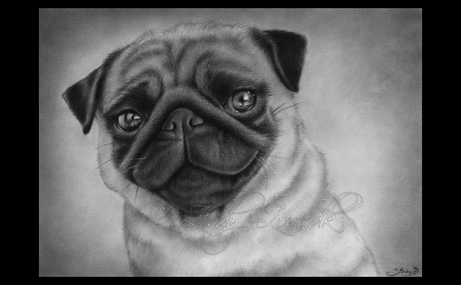 awesome-pug-drawing