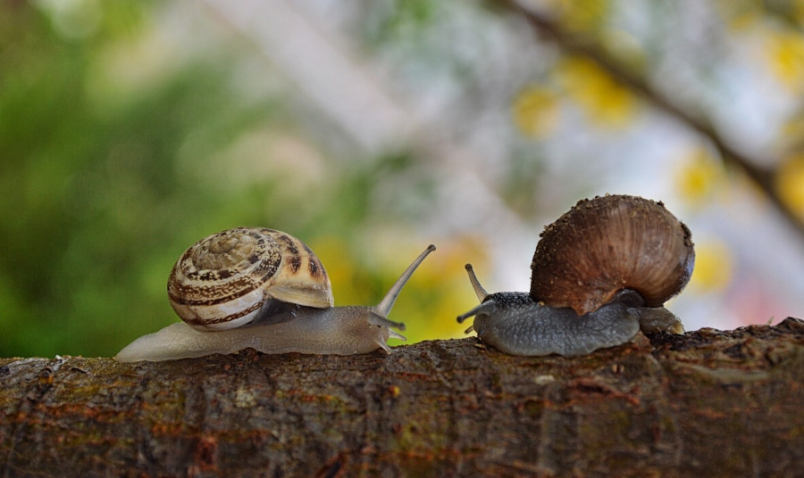 2 Snails Facing Each Other