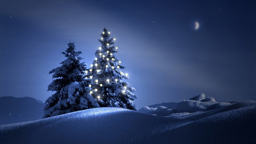 christmas-winter-tree