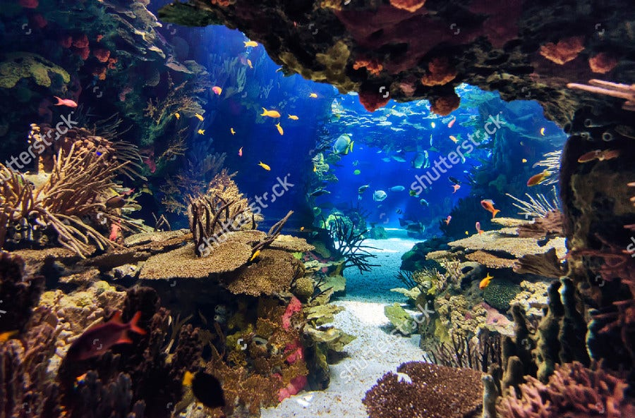 Aquarium with Plants and Colorful Fishes