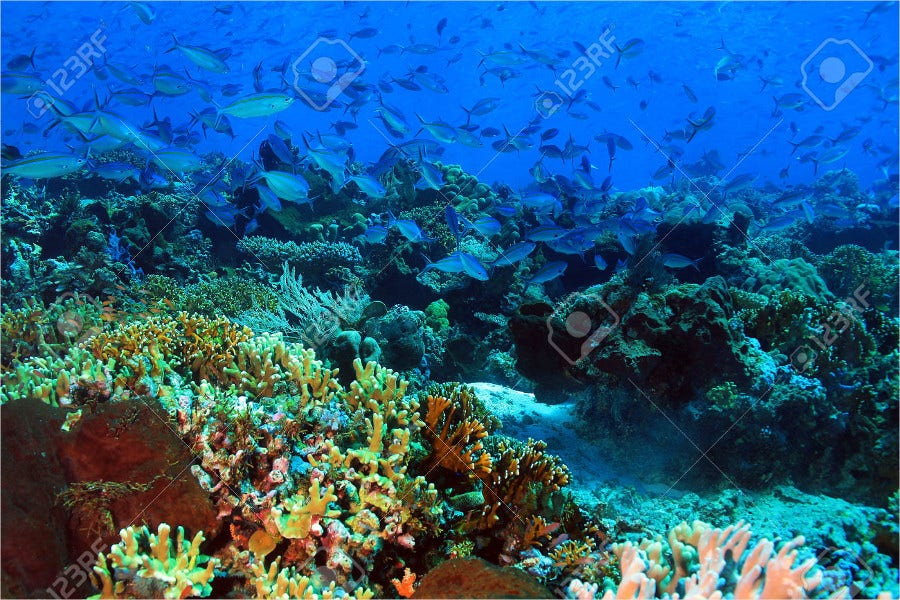 Colorful Coral Reef Photography