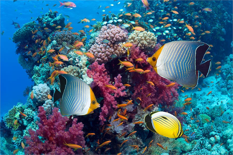 Coral Reef Scenery With Fish photography