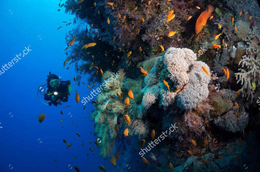 Woman Diver Explores Corals Photogrphy