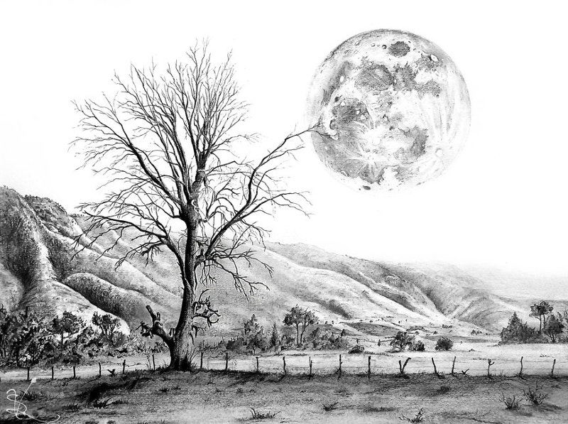Tree and the Moon Drawing