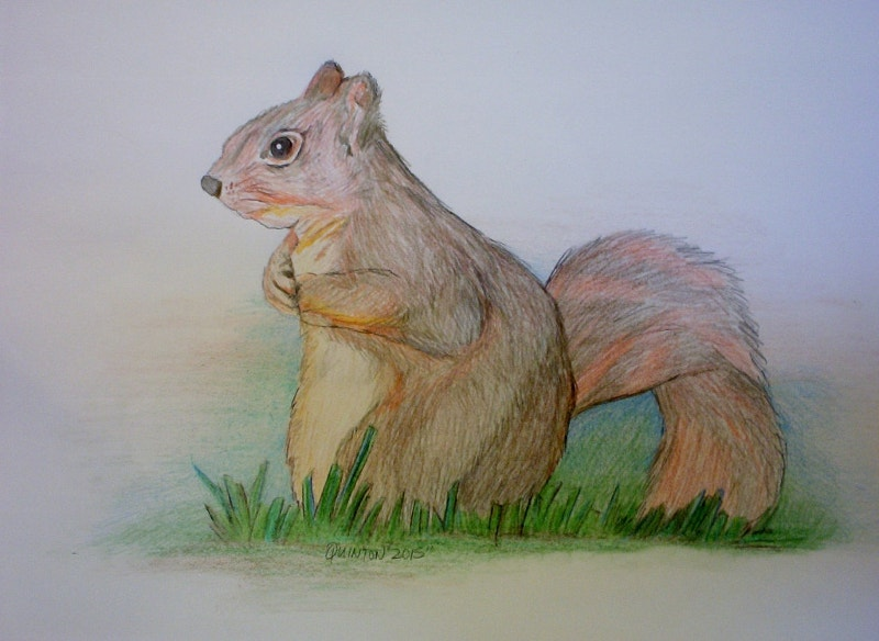 Squirrel Drawing with Original Color Pencils