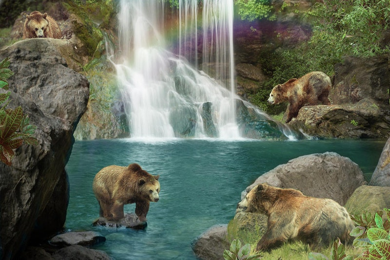Drawing of Bears at Waterfalls
