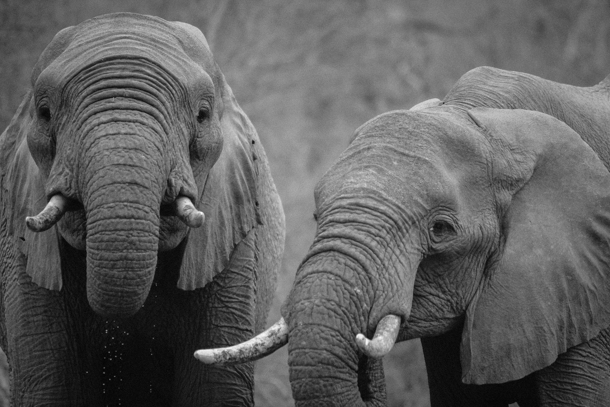 Animals Black & White Photography