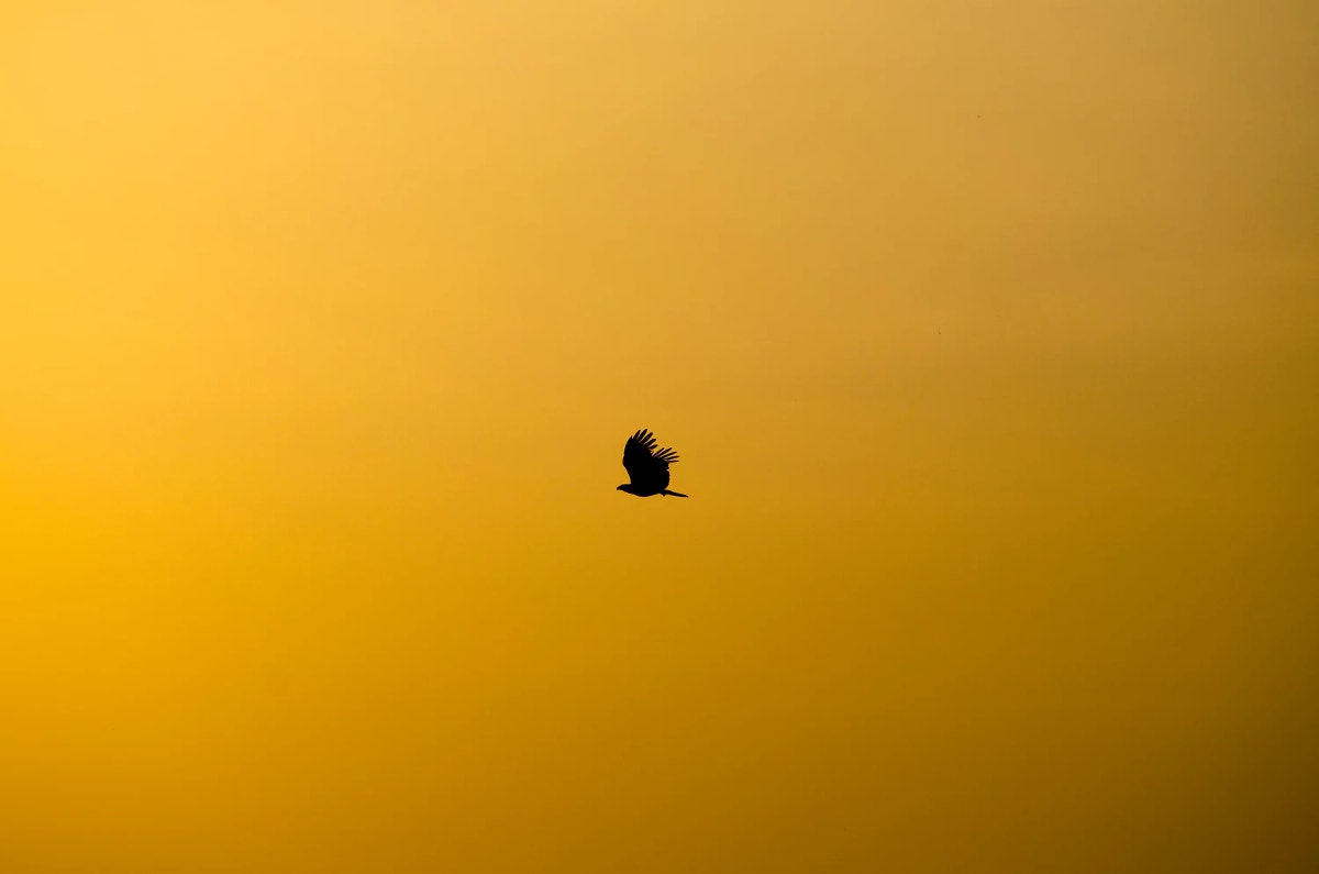 Minimal Photography of Bird