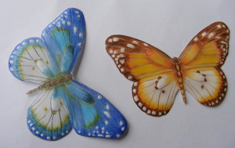 Butterfly Drawing on Paper