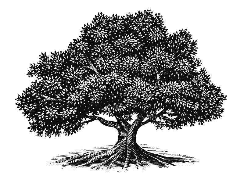 Black and White Tree Illustration