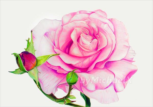 Рисованная роза цветная