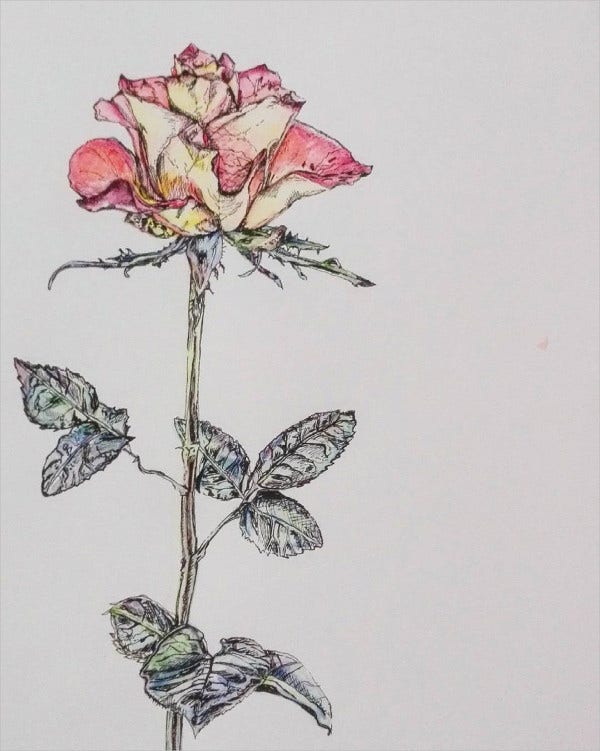 Decorative Rose Drawing