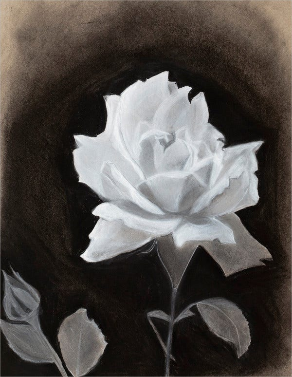 Digital Rose Drawing