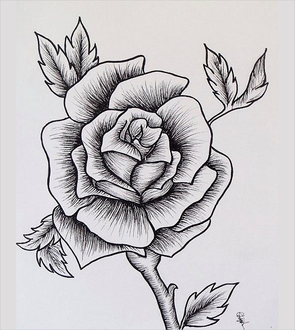 Hand Drawn Rose Drawing