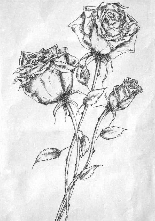 Pen Rose Drawing