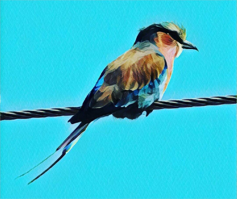 amazing african bird art work