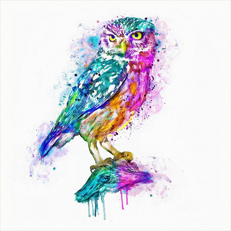 Colorful Owl Digital Art Work