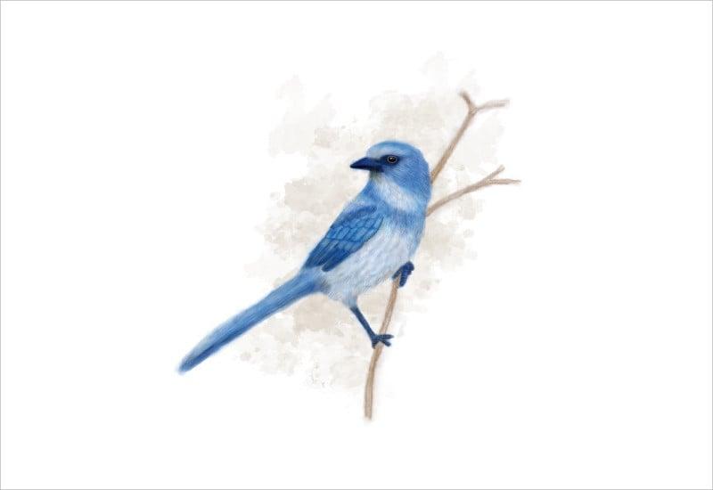 digital art painting bird