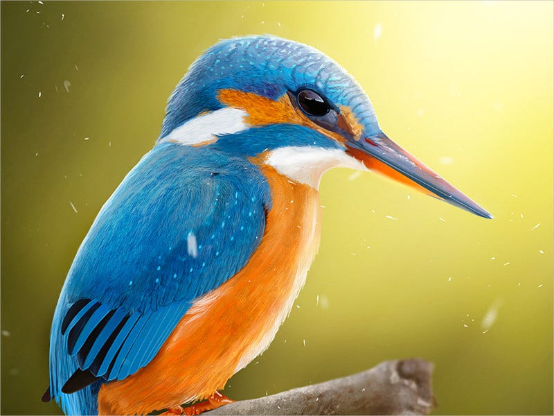 KingFisher Bird Drawing