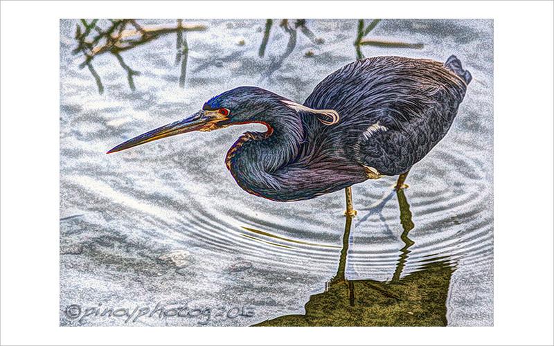 tri colored bird art work