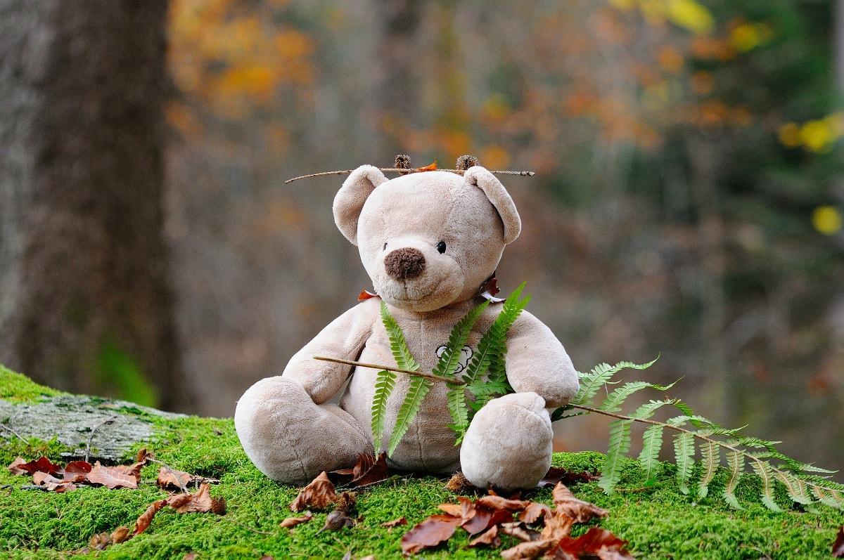 Photography of Teddy Bear