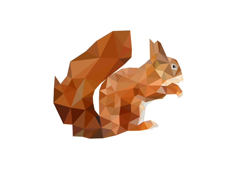 Branding Squirrel Illustration