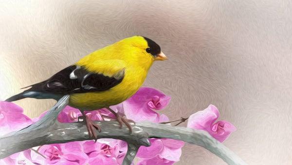 birdpaintings