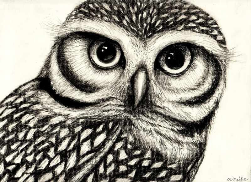 Traditional Drawing of Owl