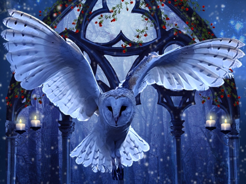 Owl of Winter Art