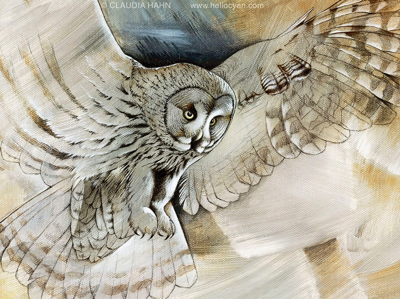 Owl Artwork Drawing
