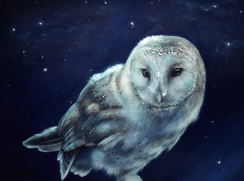 Owl Artwork by Straewefin